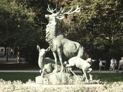 Harde de Cerfs – Jardin du Luxembourg – Paris (75006)