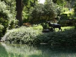Combat de cerfs – Jardins de la Patte d'Oie – Reims