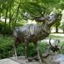 Combat de cerfs - Jardins de la Patte d'Oie - Reims - Image3