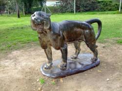 Tigre – Zoologico municipal – Parc zoologique – Montevideo