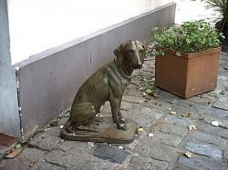 Chienne assise – Zoologico municipal – Parc zoologique – Montevideo
