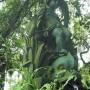 Fontaine Enfant et  dauphin - Chafariz Criança e golfinho -  Petrópolis - Image2