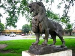Lion rugissant – Parc du 9 juillet – Parque 9 de Julio –  San Miguel de Tucumán