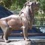 Lions (8) du monument du 20 Février  - Salta - Image6