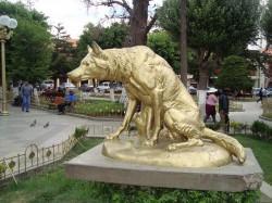 Lobo – Loup – Oruro