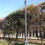 Réverbères (8) - Jardin du Palais-Royal - Paris (75001) - Image4