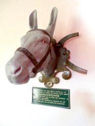 Tête d'âne – Asinodrome – Charbonnières-les-Bains