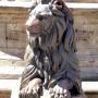 Lions - Leones (2) - Plaza 25 de Mayo - Sucre - Image5