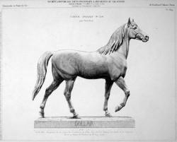 VO2_PL639 – Cheval anglais
