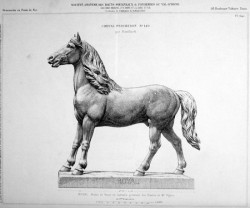 VO2_PL640 – Cheval percheron