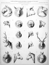 VO2_PL647 – Têtes d'animaux