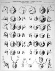 VO2_PL648 – Têtes d'animaux