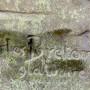 Tombe de la famille Black - Le Goff - Cimetière du Père-Lachaise - Paris (75020) - Image6