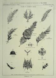 VO_MM_PL868_F – Palmes et attributs divers