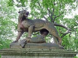 Tigre et daim – Parcul Crâng – Buzău