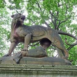 Tigre et chevreuil – Parcul Crâng – Buzău
