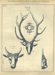 TU_DUCH_1896_PL314 – Tête de cerf, tête de boeuf