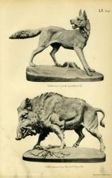 TH_1887_PL42 – Loup, Sanglier
