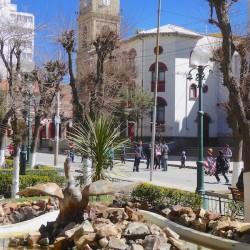 Cisne – cygne – Oruro