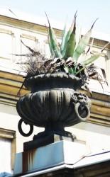 Vase – Valrose – Nice