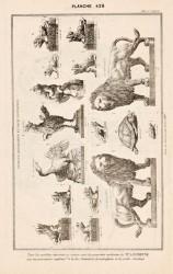 DUR_1889_PL426 – Animaux décoratifs et pour fontaines