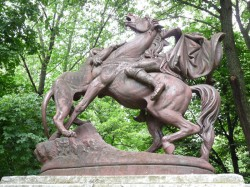 Chasse au lion – Parcul Crâng – Buzău