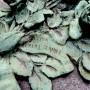 Ornements de sépulture (décorations) - Division 92 - Cimetière du Père-Lachaise - Paris (75020) - Image4