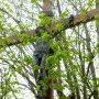 Christ en croix - Saint-Nazaire - Réalville - Image1