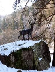 Cerf d'Europe – Saint-Gervais-les-Bains