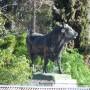 Taureaux (2) - Maipú - Santiago du Chili - Image8