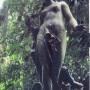 Naissance de Venus- Musée de la République – Nascimento de Vênus –Museu da Republica - Rio de Janeiro - Image1