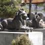 Leones - lions (2) -