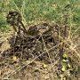 Croix funéraires - Cimetière - La Vinouse - Verlhac-Tescou - Image5
