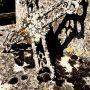 Croix funéraires - Cimetière - La Vinouse - Verlhac-Tescou - Image7