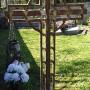 Croix de cimetière - Ginals - Image3