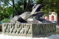 Sapo  – Grenouille – Asunción