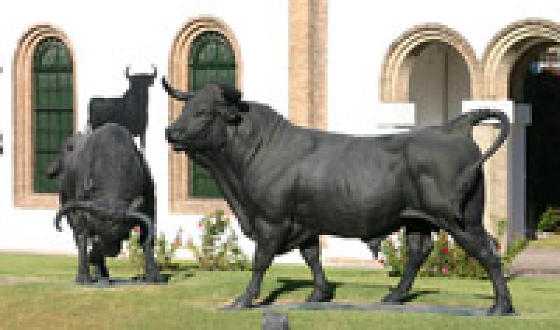Taureaux – toros – Osborne – El Puerto de Santa Maria d257e015025