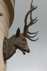 Tête de cerf – Coye-la-Forêt