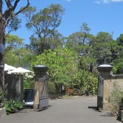 Lion et Lionne – Royal Botanic Garden – Sydney