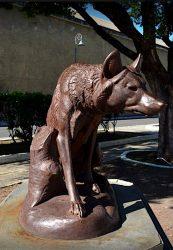 Loup assis – Lobo – Maceio (Alagoas)