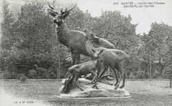 Les Cerfs – Jardin des Plantes – Nantes