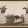 Aigles et proie - Central Park - New York - Image4