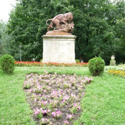 Lion et sanglier – Parcul Crâng – Buzău
