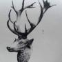 DUC_VO_PL148_F403 - Groupes et têtes d'animaux - Image2