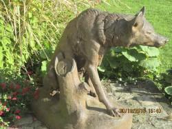 Loup – parc de Rouelles – Le Havre