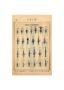 SAL_V1900_PL739 - Lances et fleurons - Image3