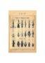 SAL_V1900_PL744 - Lances et faisceaux de lances - Image4
