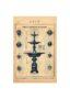 SAL_V1900_PL771 - Vasque et mascarons de fontaine - Image4
